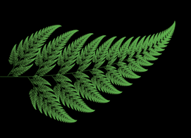 fern3revised